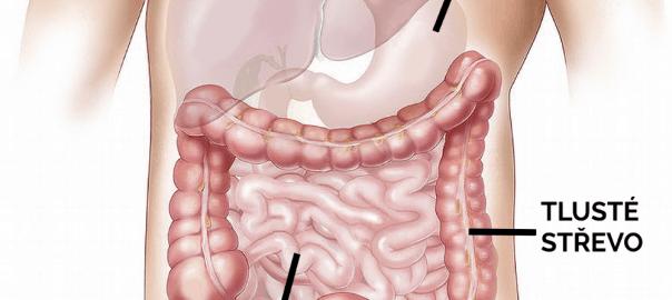 Střevní mikrobiom-jak o něj pečovat